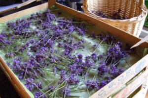 Lavendel - 500x333